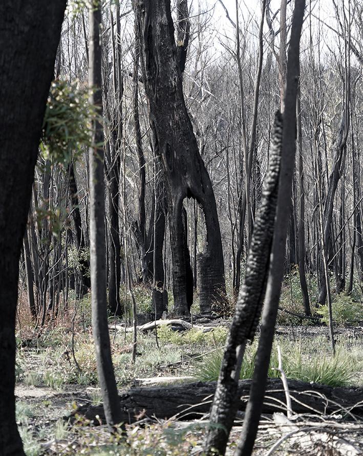 December Biomass